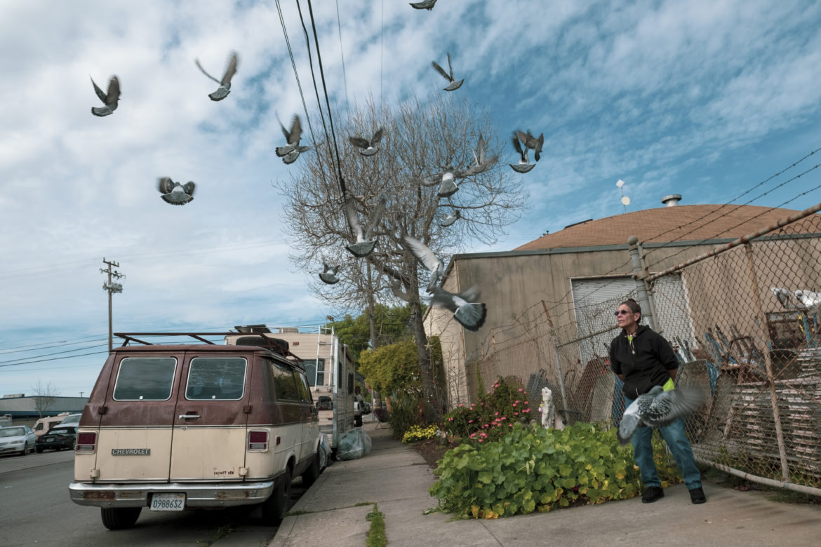 "Merced Dominguez watches the pigeons fly over her garden on Eighth Street. ""Every day, they follow me wherever I go,"" said Dominguez, throwing birdseed into the driveway. ""All the way to the Dollar Tree and back home. They are just waiting for me to feed them."" Dominguez's regular routine involves setting out food and water on the driveway for stray animals that visit the block, including a street cat she named Cookie and the dozens of pigeons that show up twice a day."
