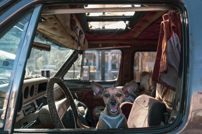 """El Chihuahua """"Bit"""" de Amber Whitson, se asoma por la ventana de su camioneta un Sábado por la tarde. Aunque es pequeño, Bit no tiene miedo y protege a Whitson, ladrando a cada peatón. Entre los habitantes de vehículos en Berkeley, los perros y los gatos ofrecen compañía y protección reconfortantes. A algunos dueños de mascotas les resulta más fácil vivir en un vehículo, ya que muchos propietarios prohíben o cobran extra por los animales, lo que agrega otro obstáculo para una vivienda asequible."""