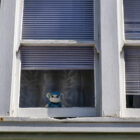 A crochet white teddy bear peaks through the window of a family home in the Ingleside neighborhood. The teddy bear wears blue scrubs, a stethoscope and a mask. As the COVID-19 pandemic stretches into its second year, evictions have resumed, and the city's most vulnerable are bearing the brunt.