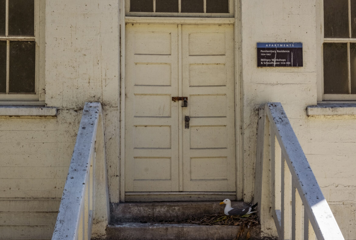 A western gull nests on the doorsteps of a former penitentiary residence.